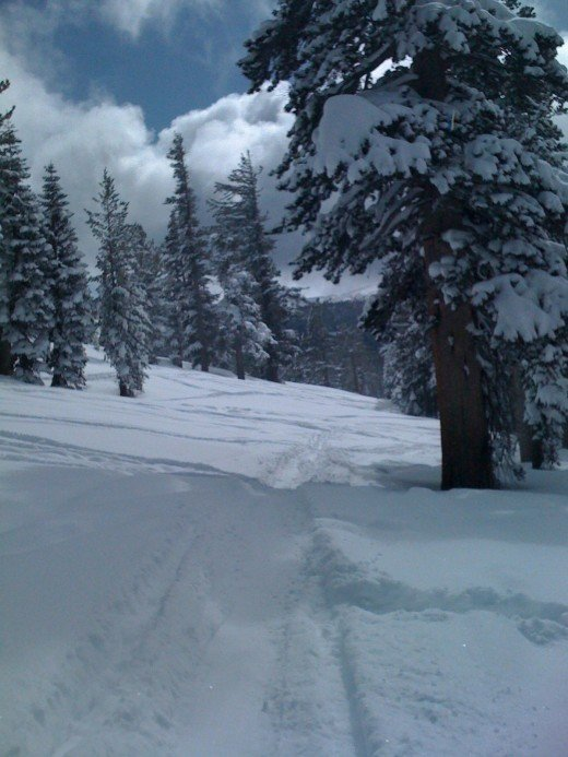 Powder day, a little off trail. That's what winter is all about to lots of Tahoe locals.