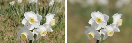Left image taken at a narrow aperture of f/22 | right image taken at a wide aperture of f/5.6.   Notice the difference in depth of field.