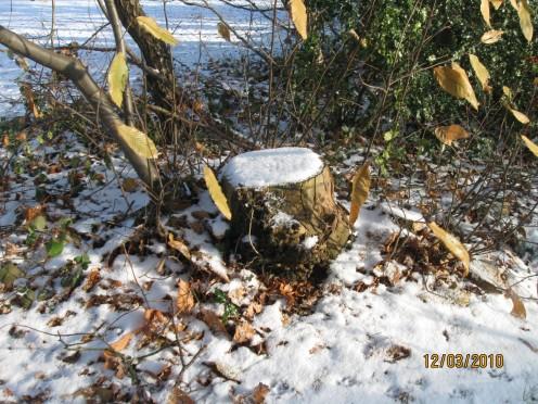 December 2010. Copyright Tricia Mason