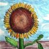 woodsywild11 profile image
