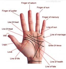 basics of palmistry