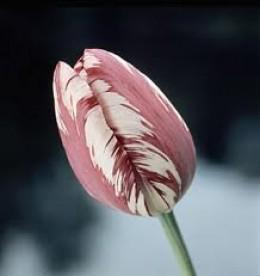цветы из ткани схемы.