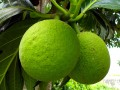 5 Favorite Foods of Grenada