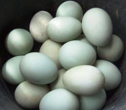 Salty-(duck)eggs