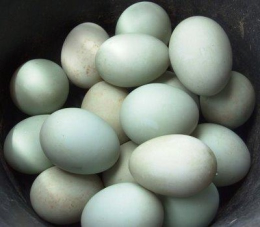 Salty-(duck)eggs