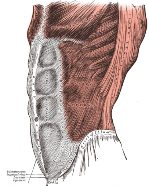 Diagram of the Core Muscles