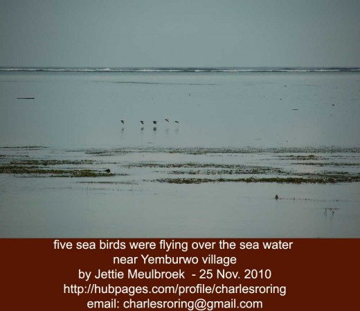 sea birds were flying over the sea water near Yemburwo village
