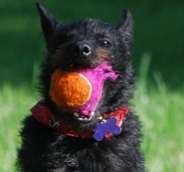 Make sure to pick a dog appropriate tennis ball.