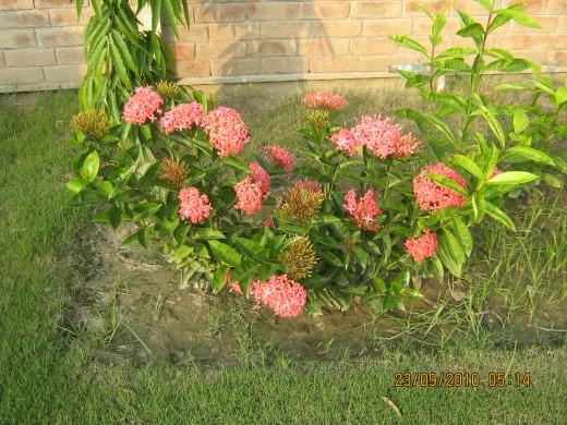 Beautiful Flowers Softer than Silk
