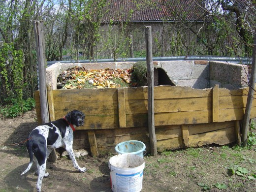 Molly, our intrepid hunting dog and our compost heaps