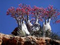 Socotra Island the Most Exotic Nature and Wildlife in the Earth