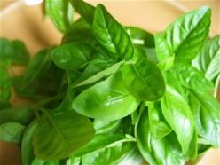 Basil Leaves For Diabetes