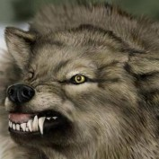 Wolfbrother profile image