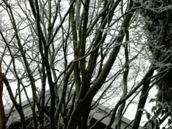 Recognising Winter Trees