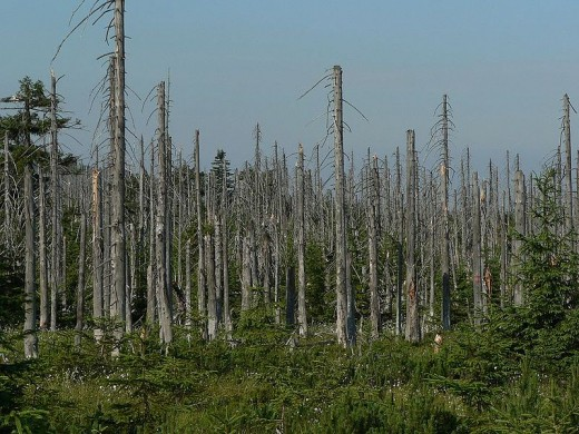 Acid rain killed these trees in the Jisera Mountains, Czech Republic.  Photo from 2006, courtesy Lovecz and Wikimedia Commons.
