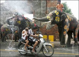 Even The Elephants Get Involved