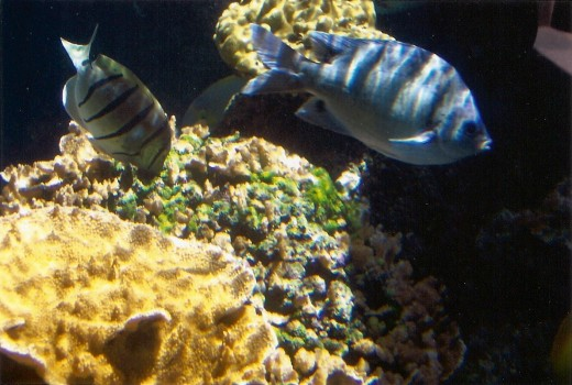 types of fishes in ocean. Saltwater fish, Maui Ocean