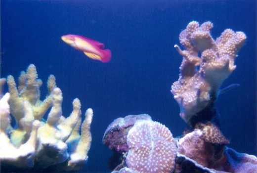 Saltwater fish, Maui Ocean Center