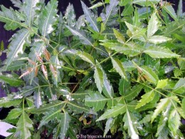 Neem  leave,a good antiretroviral drug