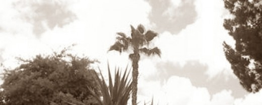 Sepia imagery of a picture I took of a palm tree. I took this picture with my cell phone and cropped it, but I really love how it turned out.