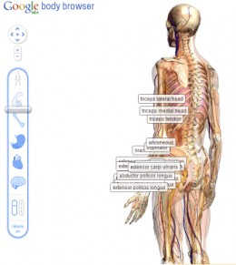 Google Body browser lets you see the inside of the human body and learn all about the organs, muscles and bones