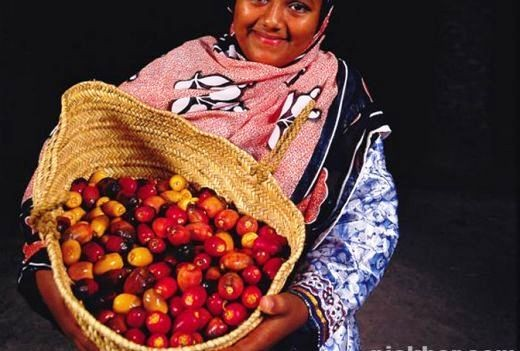 Young girl displaying fresh dates ready to eat