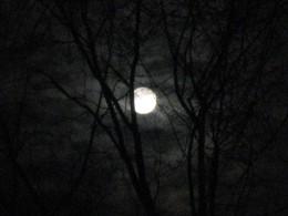 Winter Full Moon  Rising 2010