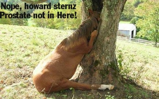 Horse laughs! Some funny pictures, photos I found | HubPages