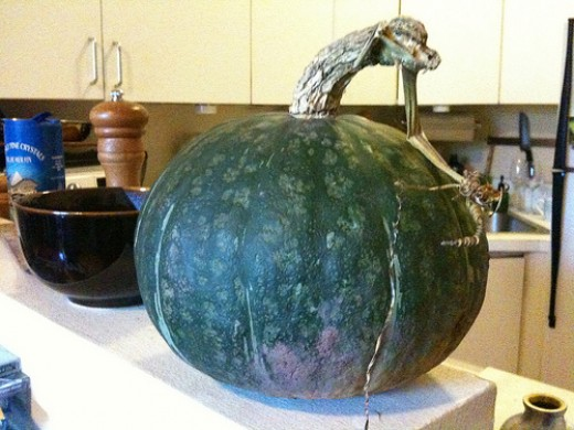 Green Japanese Pumpkin