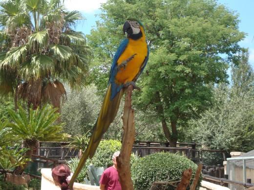 Parrots, no pirates