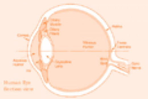 Illustration of the human eye