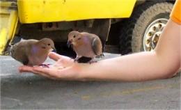 Feeding birds by hand on a Barbados island safari tour.