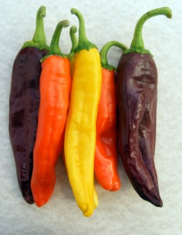 Colorful Green Chili Blend