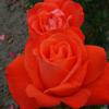 http://s3.hubimg.com/u/4310518.jpg