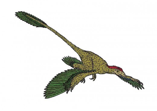 Illustration of the dromaeosaurid dinosaur Microraptor.