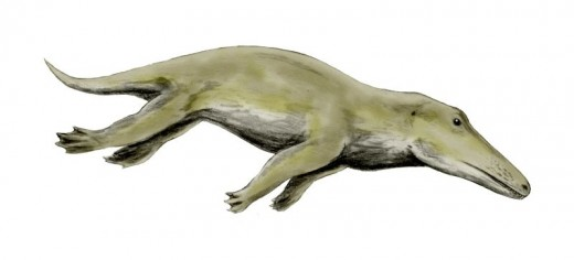 Ambulocetus natans, a primitive whale from the Eocene of Pakistan, pencil drawing, digital coloring, by Nobu Tamura.