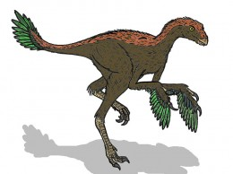 Illustration of Protarchaeopteryx, a feathered dinosaur, by Conty.