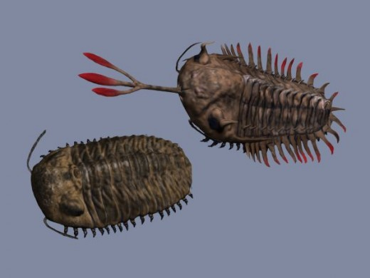 Trilobites: Phacops and Walliceratops (by Nobu Tamura)