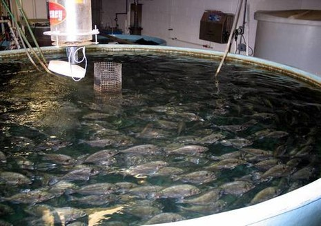 "Fish ponds in Maryland. ""A Complex system''"