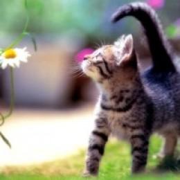 Siamese Cat Training