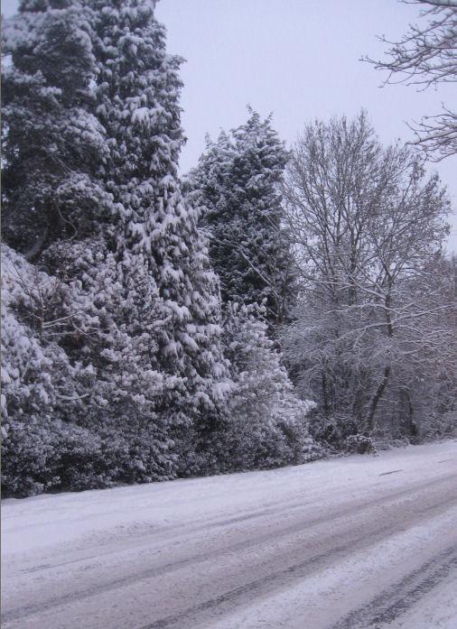 Winter  in the English Midlands. Copyrighty Tricia Mason. Dec 2010