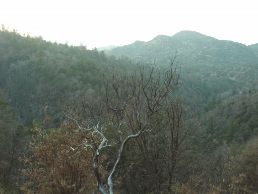 Late on Christmas day I very much enjoyed walking around the woods in Lake Arrowhead, California.