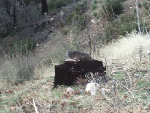 A large blackened tree stump in the San Bernardino Mountains.