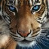 Aeryn profile image