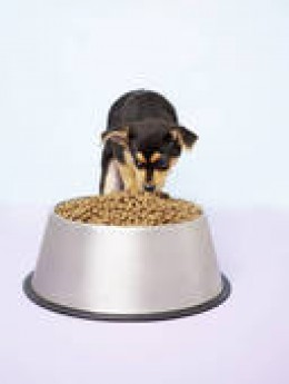 It should cost less to feed a small dog than a big one!