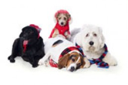 Some dogs require clothes for warmth in winter, others have human companions who just like to dress them up!