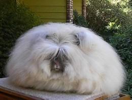 Hairy Rabbits 53