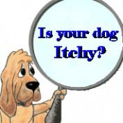 DogAllergyDiva profile image