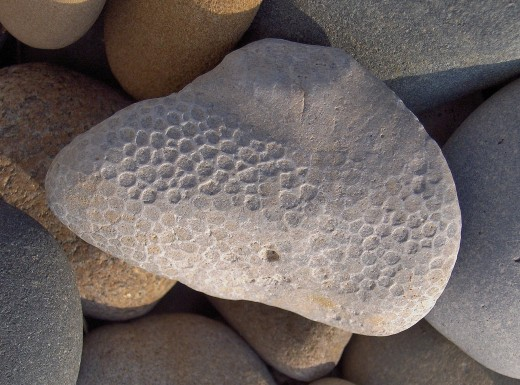FLIP SIDE OF FAVOSITE FOSSIL FROM ABOVE REVEALS HONEYCOMB PATTERN