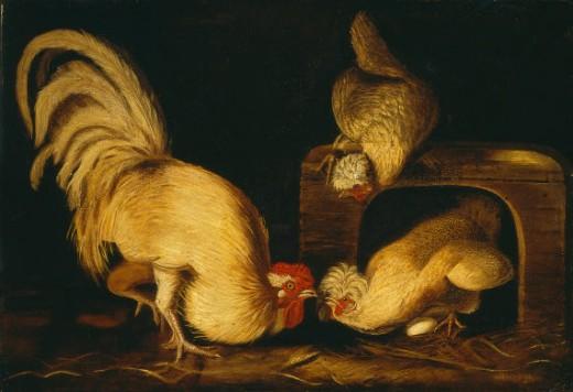 Beutiful Amazing Hot Wallpapers John James Audubon Prints